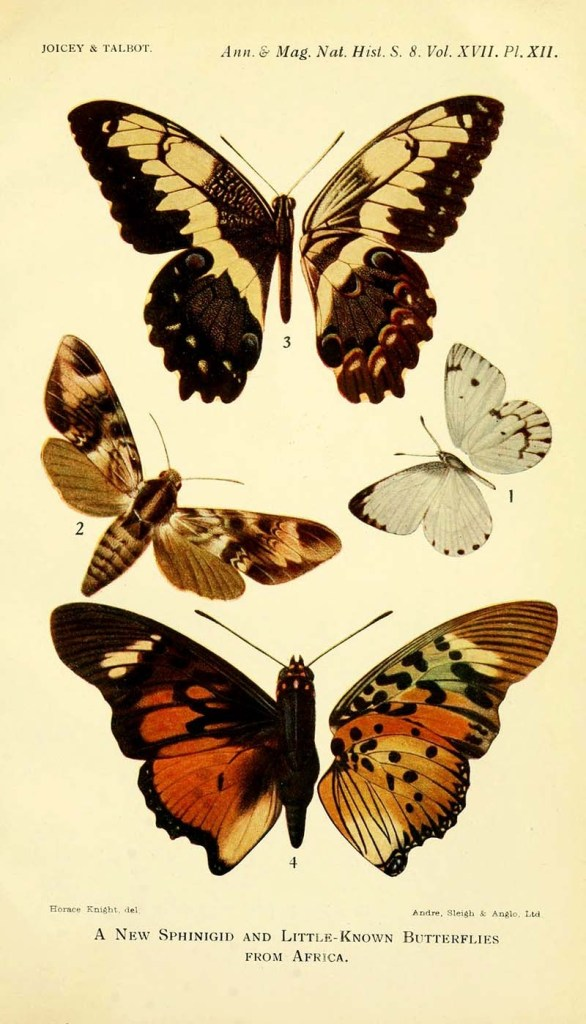 Sphingid-and-little-known-butterflies-from-Africa-1916-s